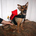 """Wile E. Coyote"" Dog Costume"