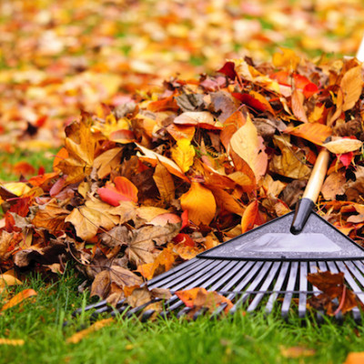 Fall-Cleanup