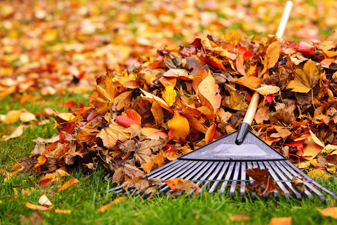 Image result for autumn cleaning