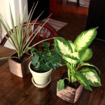 replanting-house-plants