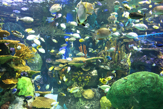 ripleys-aquarium-toronto-colourful-fish