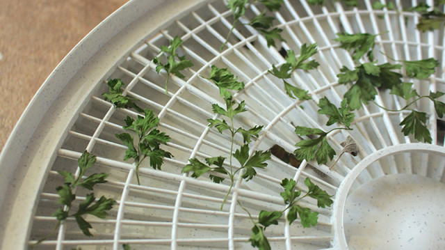 dried-parsley-dehydrator