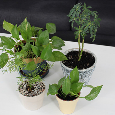 spring-cleaning-houseplants-feature